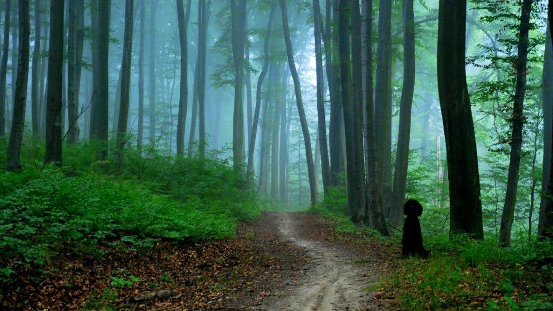 ვოლსკის ტყე